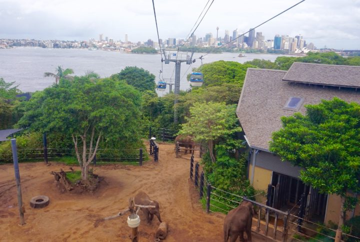 Travel Diary: Taronga Zoo- Sydney, Australia